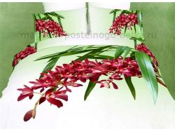 Постельное бельё Танго Сатин 2 спальный ts02-fs664-50 фото